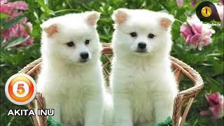 TOP 10 CUTEST DOG BREEDS 2019