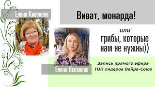 Виват, монарда!  Прямой эфир Елена Киселева/Елена Яковлева
