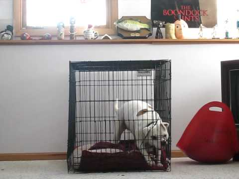 dog escapes from kennel