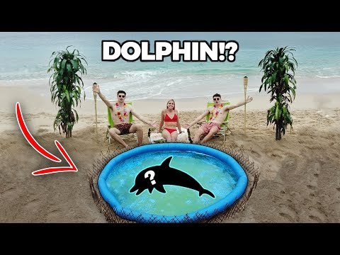 BUILDING A BEACH POND!! ... (with Dolphins)