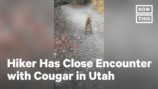 Utah Hiker Comes Face to Face with Cougar | NowThis