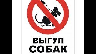 правильный ВЫГУЛ собак .  выбираем АМУНИЦИЮ