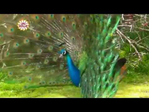 Mela Chet Wala - Ranjit Rana - Jai Bala Music - New Bhajans 2015