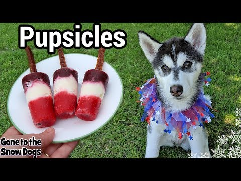 Patriotic Fruit Popsicle For Dogs | DIY Frozen Dog Treats 120 | Pupsicle
