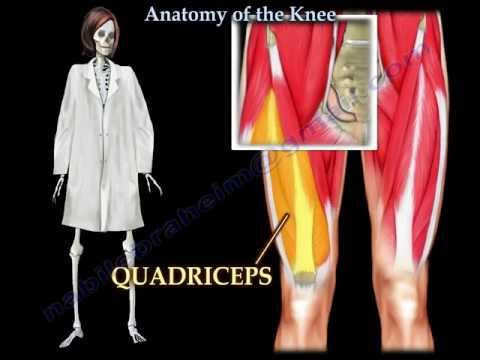 Anatomy Of The Knee  - Everything You Need To Know - Dr. Nabil Ebraheim
