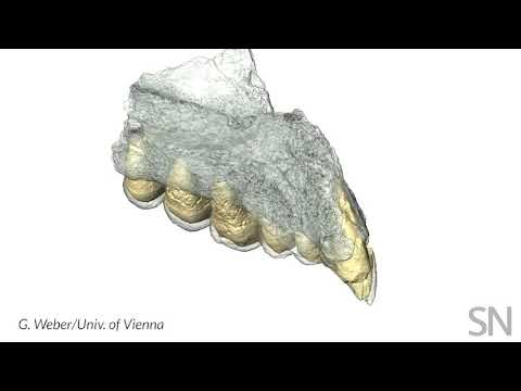This ancient jaw is speaking up about when humans left Africa | Science News