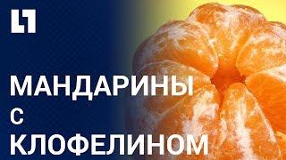 Таксист кормил пассажиров мандаринами с клофелином