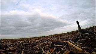 North Dakota Early Season Goose Hunting 2014 - Opening Weekend