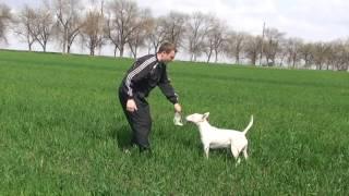 Как нужно выгуливать собаку