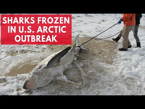 The devastating effects of the Arctic outbreak freezing the US