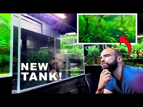 *NEW 80CM TANK* What Fish?? // Why Is My Water GREEN?!