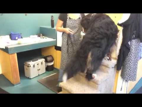 Tub Training for Grooming, Part 1