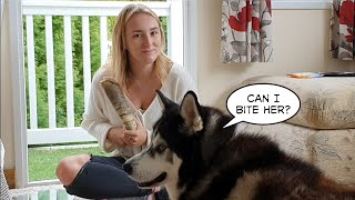 Dog and daughters love hate Relationship | Dogs Cutest Reaction when Taking her Home