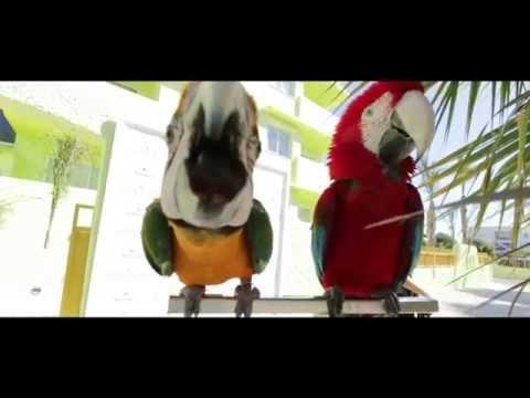 Tropicana Ibiza Coast Suites- cocktail presentation 2015