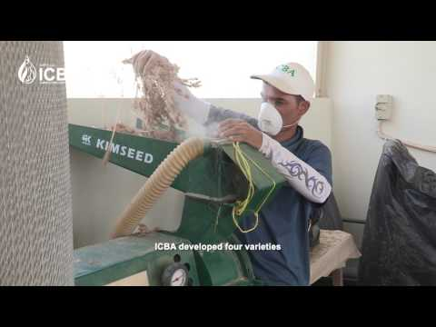 Quinoa for food security in CWANA region (Arabic)