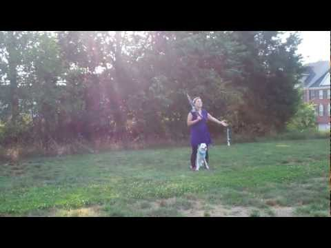 Canine Freestyle Dance - Paige the Border Collie