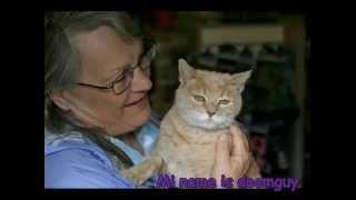 Stubbs : El Gato alcalde de alaska (Loquendo)