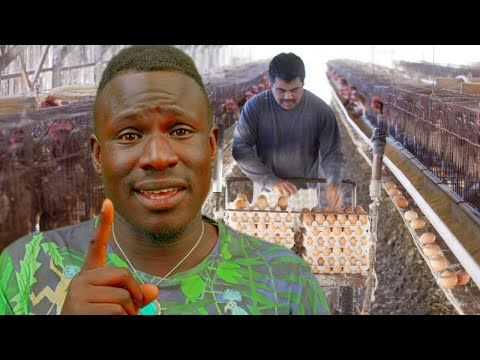 5 Things The Egg Industry Does Not Want You To See *Graphic*