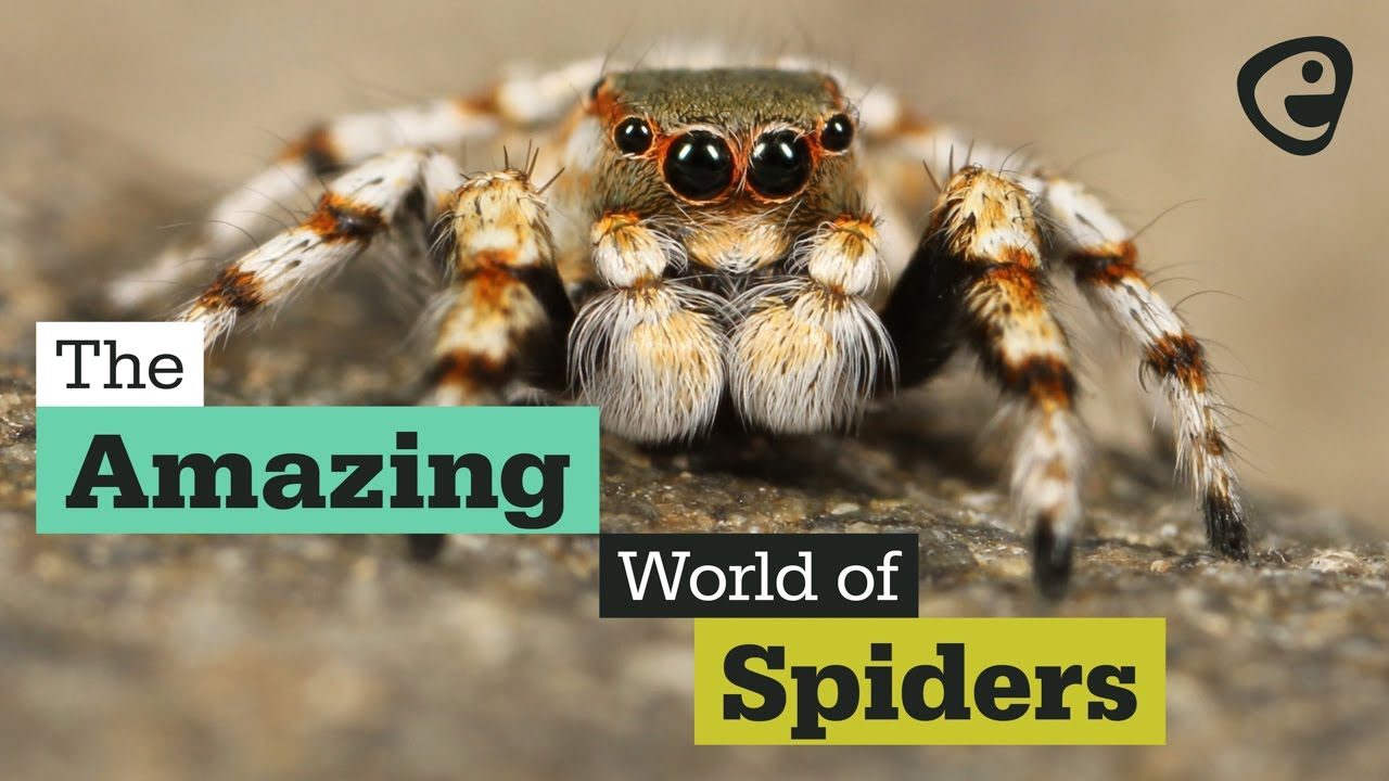 The amazing world of Spiders