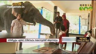 മിനി എന്ന ആനയും കൊളക്കാടൻ നാസറും തമ്മിലെ ബന്ധം | Pet Elephant | Mahout | News Theatre