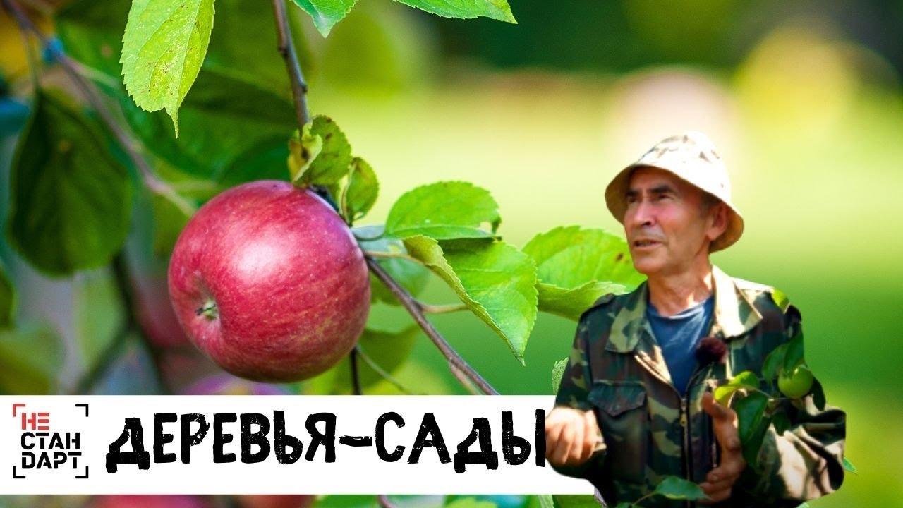 Деревья-сады // Нестандарт / Серия 5