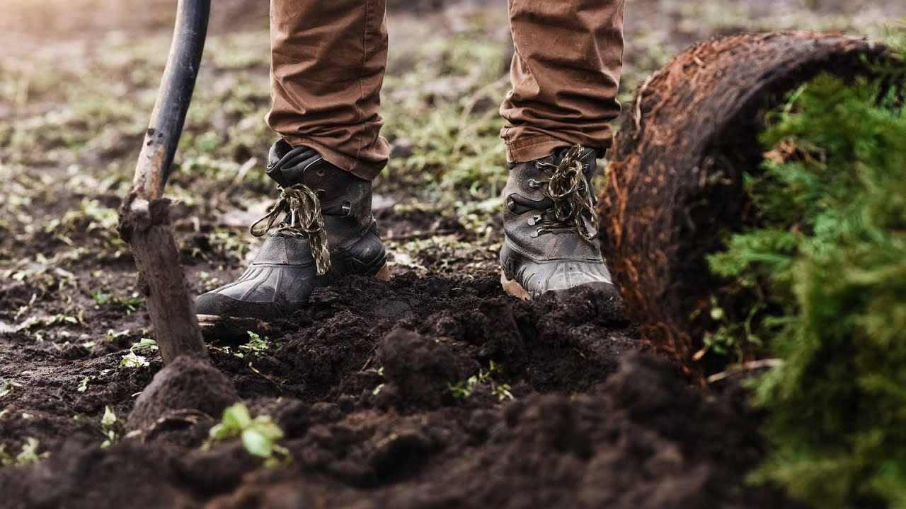 Ask an Arborist: Why Should I Plant in the Fall?