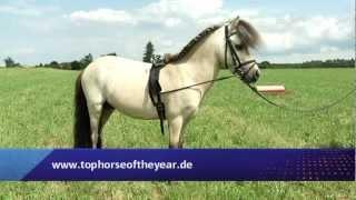 Deutschlands schönstes Pferd (Regio TV Schwaben)