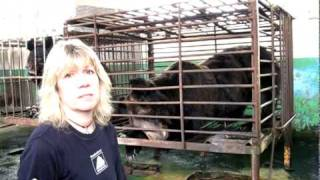 Moon bear rescue in Shandong province, China