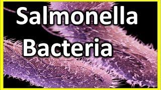 Salmonella - Bacteria : What is Salmonellosis? | salmonella symptoms