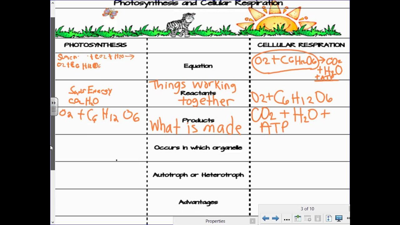Worksheets Photosynthesis And Cellular Respiration Worksheet compare and contrast cellular respiration photosynthesis lesson youtube