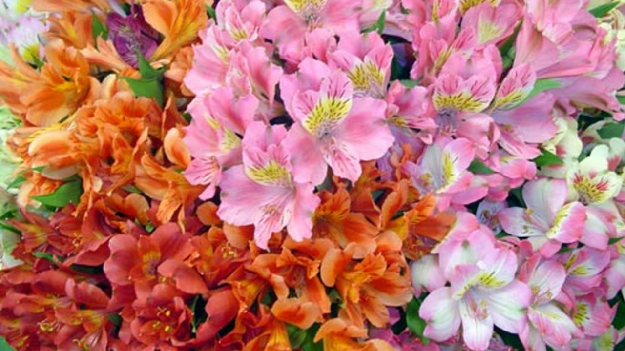 У нас можно купить цветы от 1290 руб. Сотрудничаем с лучшими оптовыми цветочными базами москвы и гарантируем вам, что наши букеты самые.