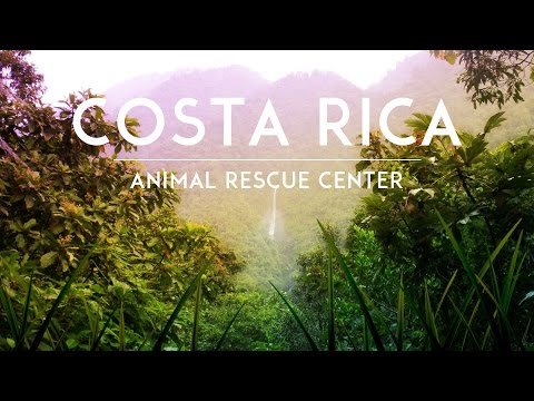 How Volunteering in Costa Rica Gave Me a New Perspective