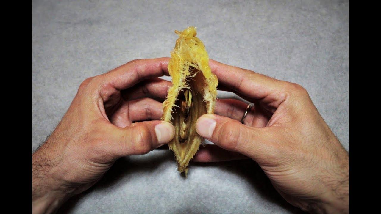 Come Piantare Il Mango l' incredibile segreto del mango, come far nascere una