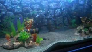 Fantasy Aquarium ( how to build aquarium )