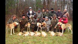 Охота на лис с русскими гончими у Ревы М. А.