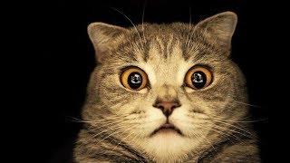 Антиреклама. Пародия на рекламу кошачьего корма.