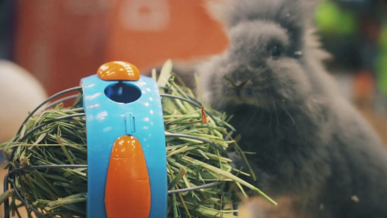 ¿Vas a tener un conejo?