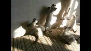 Тайские танцы... котят))