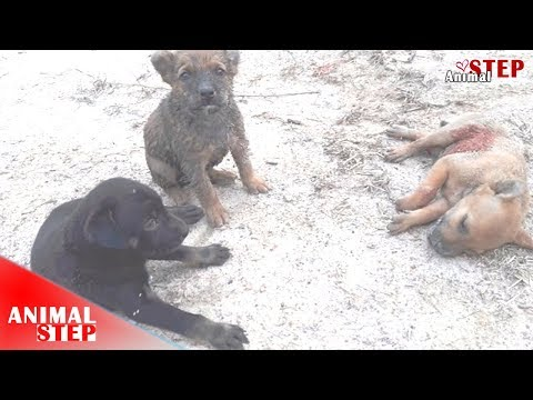 Two Dumped Puppies Watched Their Brother Who Was Bitten and Died