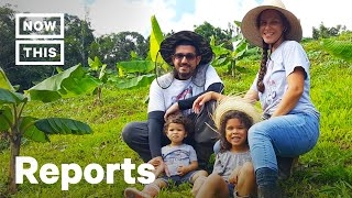 Farmers Are Creating A More Sustainable Food Supply System in Puerto Rico | Reports | NowThis