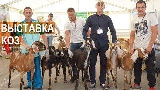 Козы разных пород на всероссийской выставке молочного козоводства