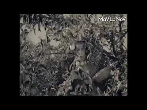 Shuhrat Daryo - Kuylaklar bilan Chumilgan Qizlar