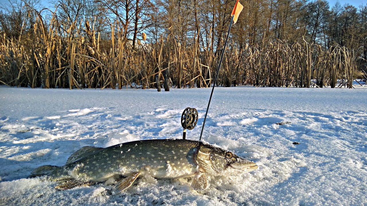 Зима 2018.рыбалка на жерлицы