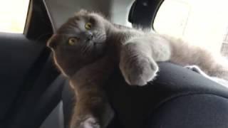 Кот не дает себя гладить