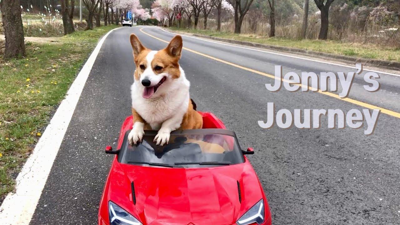 제가 좀 늦었죠? 🚗초보운전 제니의 첫 드라이브 ㅣ Jenny's Journey
