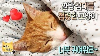 안방 침대를 점령한 고양이! 자는 모습이 너무 귀여워요. ❤️