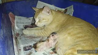 Cat gives birth