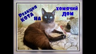 Сиамский домашний кот Барсик Реакция кота на ДОМИК ДЛЯ ХОМЯКА Прикольный тайский домашний кот