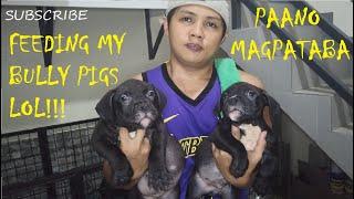 THICK FAT PIG AMERICAN BULLY DOG PUPPIES FEEDING | DON RAIDER VLOG 29