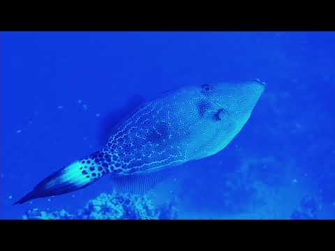 WONDERFUL DIVE Marsa Alam Akassia Swiss Resort